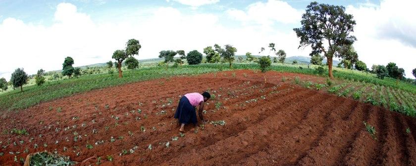 malawian-subsistence-farmer_reuters-mike-hutchings-1200x480